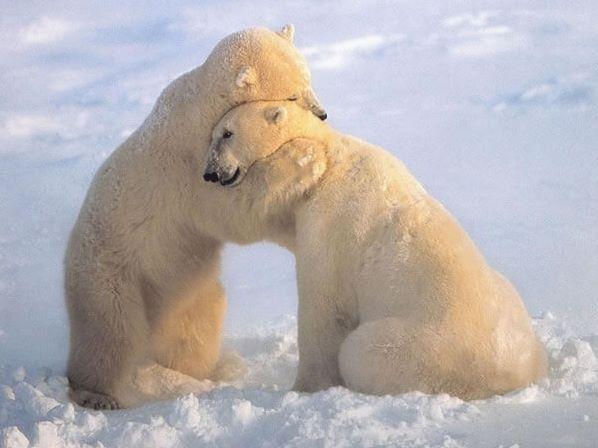 الحب فى عالم الحيوان