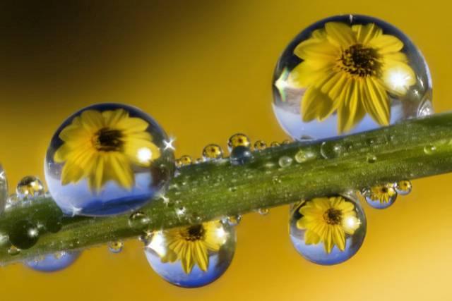 روعة لقطرات الندى-صور قطرات كحبات BeautifulDewDrops12.