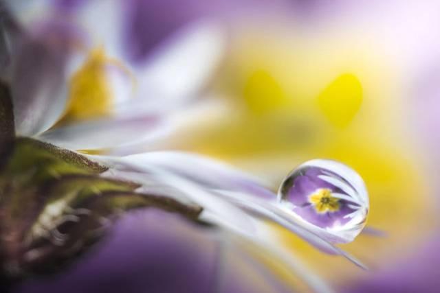 روعة لقطرات الندى-صور قطرات كحبات BeautifulDewDrops15.