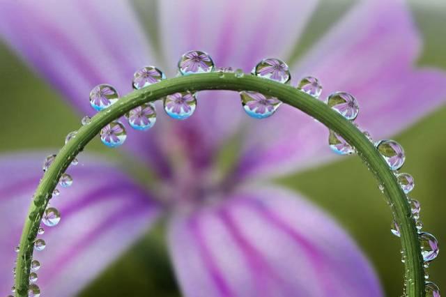 روعة لقطرات الندى-صور قطرات كحبات BeautifulDewDrops17.