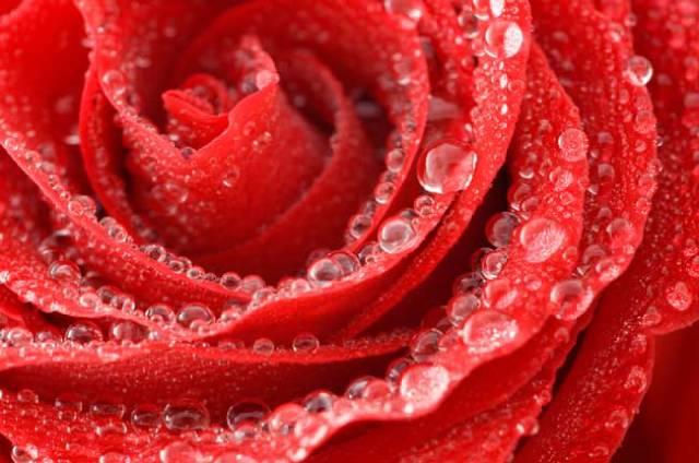 روعة لقطرات الندى-صور قطرات كحبات BeautifulDewDrops25.
