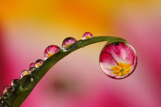 روعة لقطرات الندى-صور قطرات كحبات BeautifulDewDrops4.j