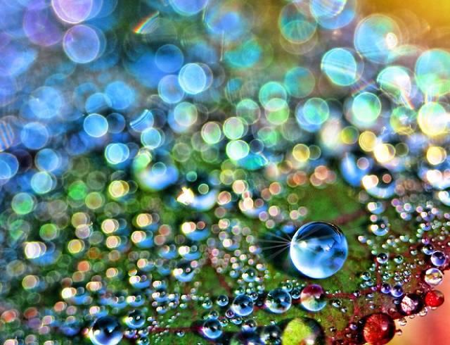 روعة لقطرات الندى-صور قطرات كحبات BeautifulDewDrops6.j