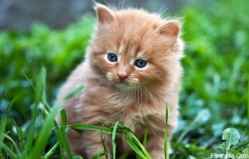 صور قطط جميله, صور قطط حلوه, اجمل صور قطط