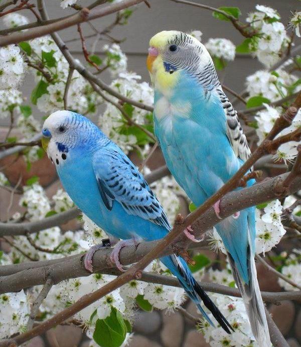 طيور الببغاء, صور ببغاء 2013, اجمل الببغاوات