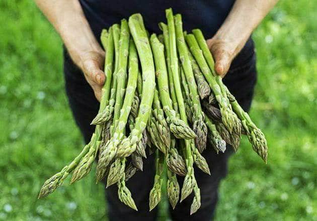 اجعلي نبات الهليون جزءا من نظامك الغذائي ...لماذا؟
