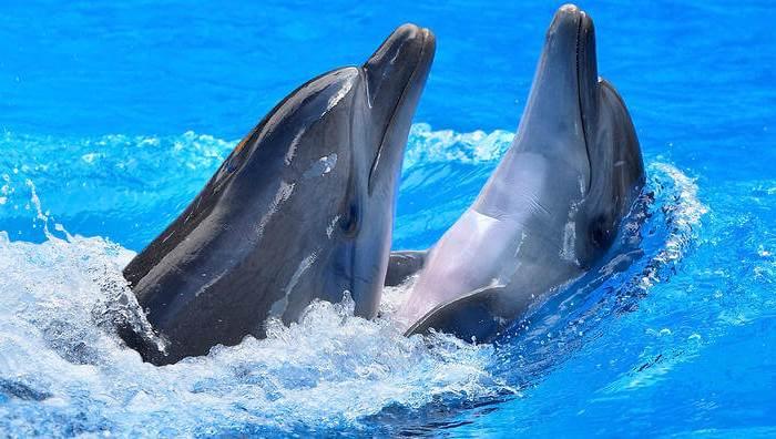 أجمل صور الدلافين صديقة الإنسان في ٢٠١٦
