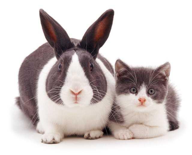 20 صورة لطيفة تظهر تشابه الآرانب مع حيوانات أخري