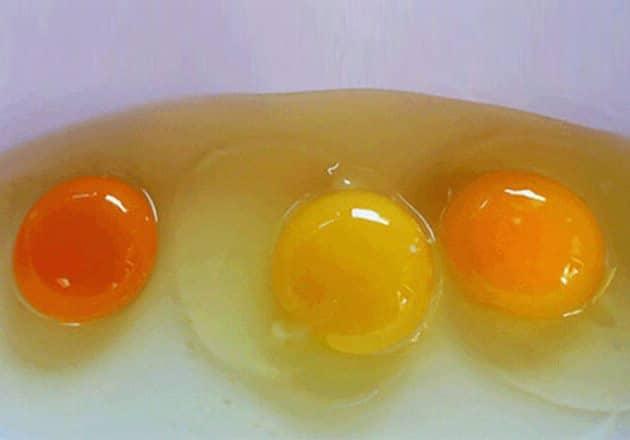 تعرفي على لون صفار البيض الصحي وأسباب تغير لونه