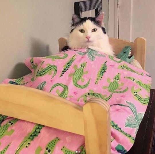 أجمل صور القطة صوفي وهى نائمة على سريرها الصغير