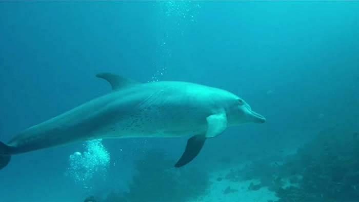 محمية الدلافين