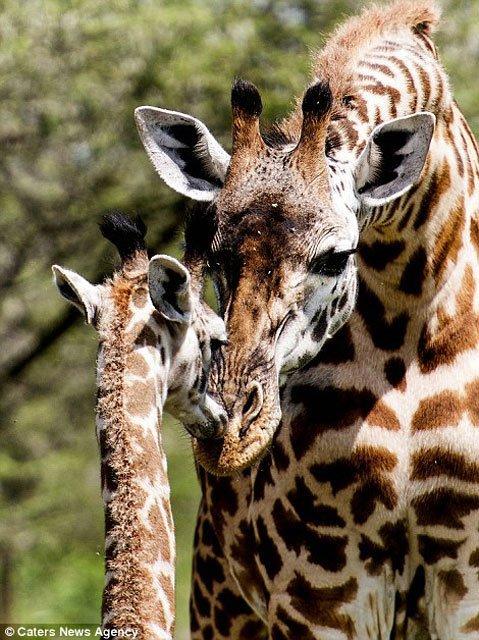 الحيوانات أيضا تحتفل عيد الحب بالصور
