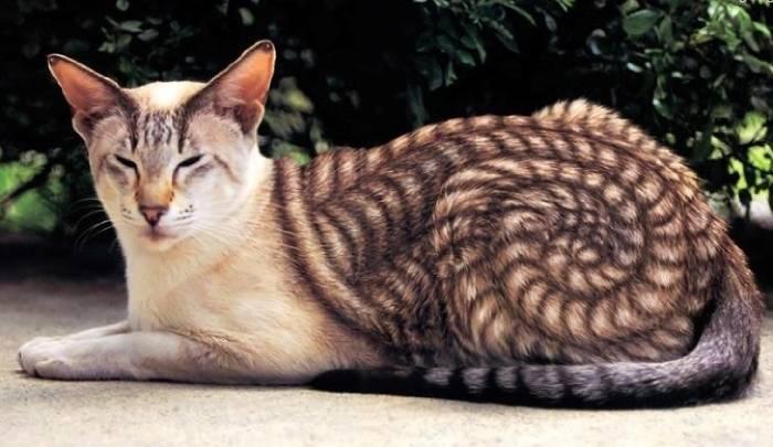 أجمل 10 صور الحيوانات تثبت أن الطبيعة تعلمت فن الفوتوشوب