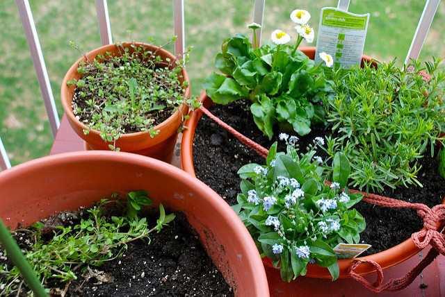 5 خضروات يمكن زراعتها في المنزل بطرق سهلة